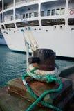 Il morsetto della barca lega la nave da crociera per mettersi in bacino Fotografie Stock