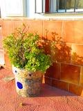 Il mosaico ha coperto il vaso da fiori Fotografie Stock Libere da Diritti