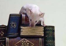 Il mouse sulla pila di libri. Fotografia Stock