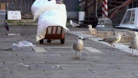 Il movimento lento dell'uomo ha funzionato con un carrello a mano in un mercato di strada con i gabbiani stock footage