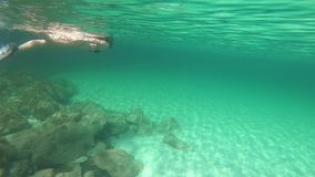Il movimento lento di bella giovane donna in un bikini nero preso da nuoto subacqueo nello stile libero ed il delfino in transpar archivi video