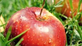 Il movimento lento ha sparato delle gocce di acqua che colpiscono la mela matura rossa stock footage