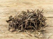 Il mucchio dei semi del tagete è pronto a piantare in a Fotografie Stock Libere da Diritti