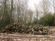 il mucchio dei tronchi di albero di legno del ceppo dei rami ha tagliato il legno w della foresta fotografia stock libera da diritti