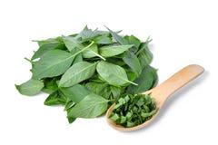 Il mucchio dell'erba verde del basilico della foglia in cucchiaio di legno isolted su bianco Fotografie Stock Libere da Diritti