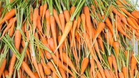 Il mucchio delle carote Immagini Stock Libere da Diritti