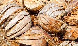 Il mucchio delle coperture della noce di cocco Fotografia Stock Libera da Diritti