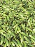 Il mucchio delle spighe verdi fresche crude mature raccolte del mais o del mais del husky struttura il fondo fotografie stock libere da diritti