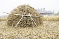 Il mucchio dello strumento di legno asciutto del locale e della paglia di riso splende su prima dell'elaborazione per il grano de Fotografia Stock Libera da Diritti