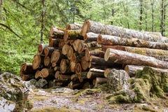 Il mucchio di collega la foresta Fotografia Stock Libera da Diritti