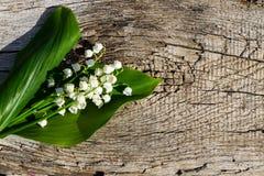 Il mughetto fiorisce su fondo di legno con lo spazio della copia Immagini Stock Libere da Diritti