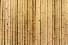 Il murale di bambù asciutto della parete farebbe un grande desig naturale della carta da parati immagine stock