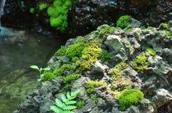 Il muschio cresce sulla pietra vicino dalla cascata Immagini Stock