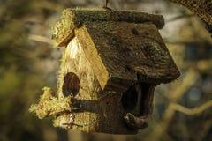 Il muschio di legno ha coperto la casa dell'uccello fotografie stock libere da diritti