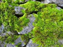 Il muschio ha coperto le rocce Fotografia Stock