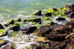 Il muschio oscilla la costa dell'acqua di mare dell'Australia Kalbarri Immagini Stock