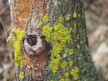 Il muschio sull'albero Immagini Stock