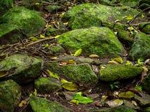 Il muschio verde ha coperto le pietre immagine stock libera da diritti