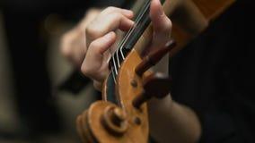 Il musicista gioca il violino nella società filarmonica archivi video