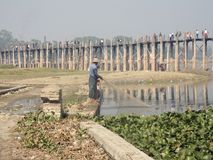 Il Myanmar - ponte del teakwood U Bein con pesca del pescatore con la rete fotografia stock libera da diritti