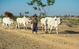 Il Myanmar rurale Fotografia Stock Libera da Diritti