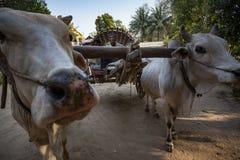 Il Myanmar - un'attesa speciale del taxi vicino al fiume di Irrawaddy fotografia stock