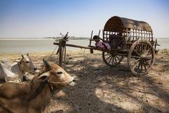 Il Myanmar - un'attesa speciale del taxi vicino al fiume di Irrawaddy fotografie stock