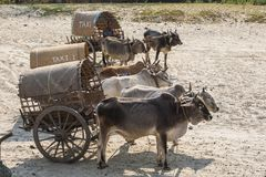 Il Myanmar - un'attesa speciale del taxi vicino al fiume di Irrawaddy fotografia stock libera da diritti