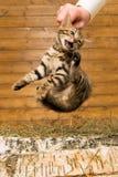 Il n'aime pas le chaton, il est pris de Photographie stock libre de droits
