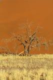 Il Namibia Fotografia Stock Libera da Diritti