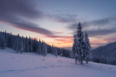 Il Natale abbellisce con l'albero di abete nella neve ed alloggia nella m. Fotografia Stock Libera da Diritti