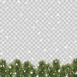 Il Natale confina con i rami di pino su fondo trasparente Vettore illustrazione di stock