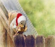 Il Natale squirrel la seduta sopra recinta l'inverno Fotografia Stock Libera da Diritti