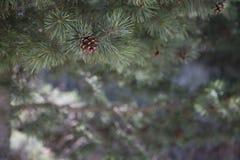 Il Natale sta venendo Fotografie Stock Libere da Diritti