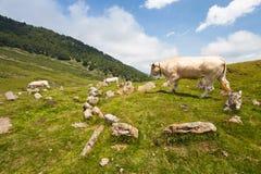 Il Necropolis dell'età di ferro ha attraversato da una mucca Fotografia Stock