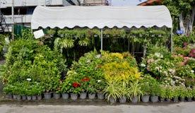 Il negozio della pianta e degli alberi per fare il giardinaggio Fotografie Stock