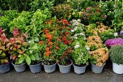 Il negozio della pianta e degli alberi per fare il giardinaggio Fotografia Stock