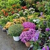 Il negozio della pianta e degli alberi per fare il giardinaggio Immagini Stock Libere da Diritti