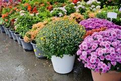 Il negozio della pianta e degli alberi per fare il giardinaggio Immagine Stock
