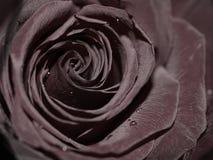 Il nero è aumentato Fotografia Stock Libera da Diritti