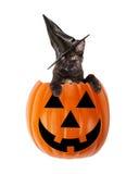 Il nero Cat In di Halloween una Jack-O-lanterna Immagine Stock Libera da Diritti