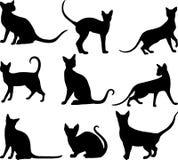 Il nero dei gatti Fotografie Stock Libere da Diritti