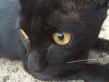 Il nero del gatto Fotografia Stock