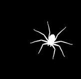Il nero del ragno Immagini Stock