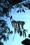 Il nero dell'uccello Immagine Stock