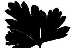 Il nero della foglia Fotografia Stock