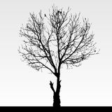 Il nero della siluetta dell'albero Fotografia Stock Libera da Diritti