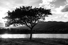 Il nero della siluetta dell'albero Fotografie Stock Libere da Diritti