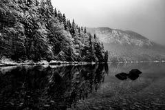 Il nero nel bianco Fotografie Stock