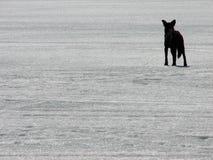 Il nero nel bianco Fotografia Stock Libera da Diritti